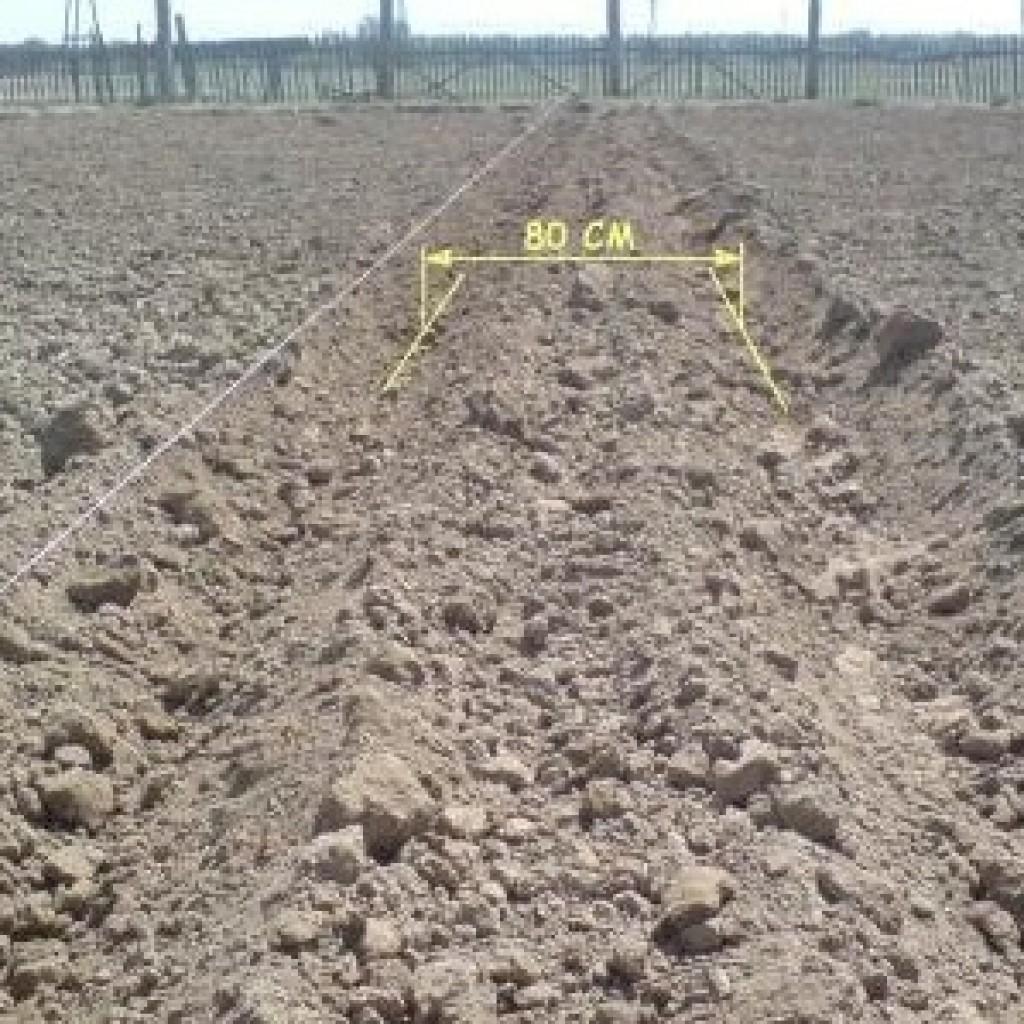 Схемы посадки картофеля фото